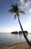 Palmier au-dessus de la mer et des maisons sur des piles au-dessus de l'eau Photographie stock