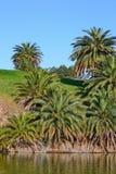 Palmier au lac vert Photographie stock