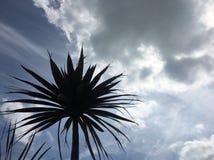 Palmier au soleil Photo stock