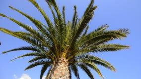 Palmier au soleil clips vidéos