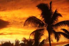 Palmier avec le coucher du soleil Photos libres de droits