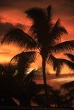 Palmier avec le coucher du soleil photos stock