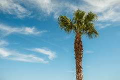 Palmier avec le fond de ciel bleu Photo stock