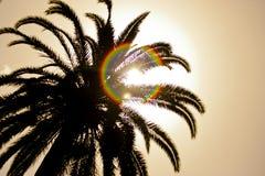 Palmier avec le soleil Photo stock