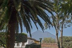 Palmier avec le volcan images stock