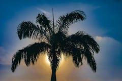 Palmier avec Sun derrière la scène de coucher du soleil Image libre de droits