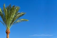 Palmier contre le ciel bleu, l'espace de copie images stock