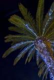 Palmier contre le ciel nocturne foncé, lumières lumineuses Photo stock