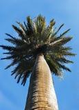 Palmier contre un ciel ensoleillé images stock