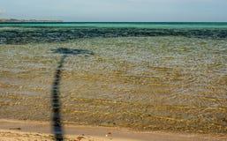 Palmier dans l'eau Photo stock