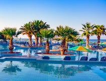 Palmier dans la piscine Image libre de droits