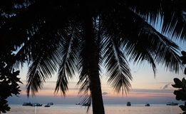Palmier dans la plage Photos libres de droits