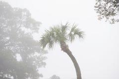 Palmier dans le brouillard Images libres de droits