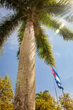 Palmier dans le Caribbeans Photos stock