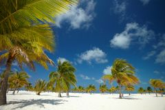 Palmier dans le ciel Photo stock