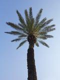 Palmier dans le coucher du soleil au-dessus du ciel bleu Image stock