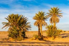 Palmier dans le désert du Sahara photographie stock
