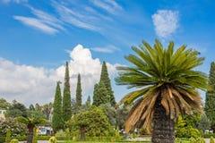 Palmier dans le premier plan Image libre de droits
