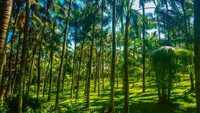 Palmier dans Ténérife au parque de Loro Photographie stock libre de droits