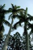 Palmier dans un cru photographie stock libre de droits
