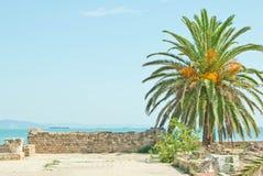 Palmier dattier et ruines de Carthage image libre de droits
