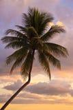 Palmier de coucher du soleil photos stock