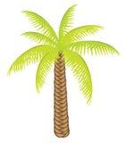 Palmier de couleur de vecteur pour votre conception. Image libre de droits