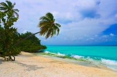 palmier de dépliement de plage tropical Images libres de droits