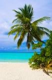 Palmier de dépliement sur la plage tropicale Image stock