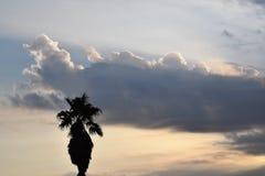 Palmier de lever de soleil Photos libres de droits