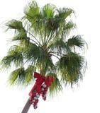 Palmier de Noël Photos libres de droits