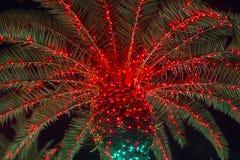 Palmier de Noël image stock