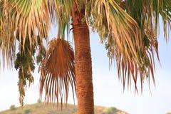 Palmier de noix de coco Fond de cru Carte de voyage Rétro modifié la tonalité images stock
