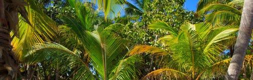 Deux coeurs d 39 amour sur le sable photo stock image du - Palmier noix de coco ...