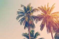 Palmier de noix de coco Photographie stock