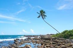Palmier de noix de coco dans le paysage rocheux Photo libre de droits