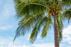 Palmier de noix de coco sur la belle plage tropicale Photo stock