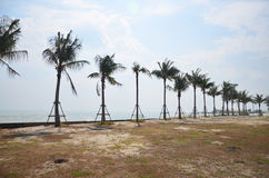 Palmier de noix de coco sur la plage de la mer Photo libre de droits
