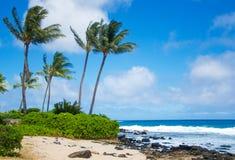 Palmier de noix de coco sur la plage en Hawaï photo stock