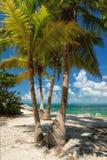 Palmier de noix de coco sur la plage florida photographie stock