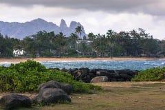 Palmier de noix de coco sur la plage sablonneuse dans Kapaa Hawaï, Kauai photographie stock libre de droits