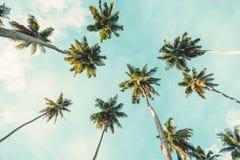 Palmier de noix de coco sur le fond de ciel Vue d'angle faible Image modifiée la tonalité Photos libres de droits