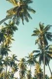 Palmier de noix de coco sur le fond de ciel Vue d'angle faible Image modifiée la tonalité Image stock