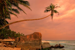 Palmier de penchement avec de grandes roches, plage d'Unawatuna, Sri Lanka Photos stock