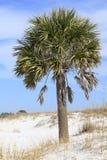 Palmier de sable sur la plage blanche de sable de la Floride Images stock
