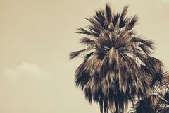 Palmier de silhouette à l'arrière-plan de filtre de vintage Images libres de droits
