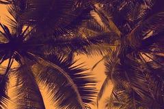 Palmier de silhouette à l'arrière-plan de filtre de vintage Images stock