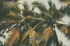 Palmier de silhouette à l'arrière-plan de filtre de vintage Photographie stock