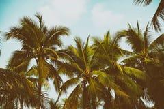 Palmier de silhouette à l'arrière-plan de filtre de vintage Photo stock