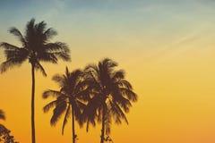 Palmier de silhouette avec le filtre de vintage Image libre de droits